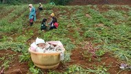 Ibunya Bekerja, Bayi 4 Bulan di Bandung Terpaksa Dibawa Kakeknya Berkebun