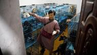 Potret Haru Hidup Wanita yang Pelihara 1.300 Anjing dan 100 Kucing Terlantar