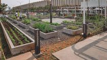 Ada Kebun Hijau Instagramable di Tengah PIK