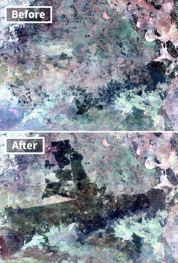 Seperti ini penampakan sebelum dan sesudah kebakaran Gurun Tanami di Australia.