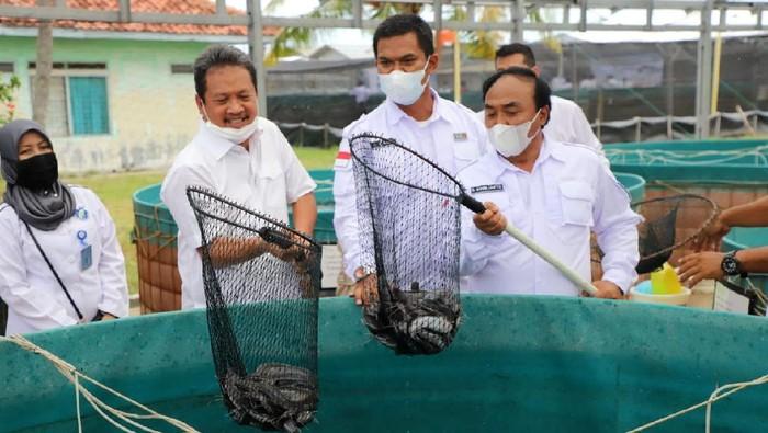 Menteri Kelautan dan Perikanan Sakti Wahyu Trenggono resmikan tambak udang di Karawang. Pembangunan diharapkan dapat tingkatkan hasil produksi udang nasional.