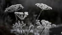 ang menarik, Skotlandia ternyata memiliki 421 istilah berbeda yang digunakan untuk menyebut salju. Christopher Furlong/Getty Images