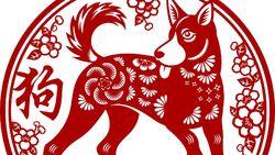 Ramalan Shio Anjing di 2021: Rezeki Lancar, Jomblo Lebih Banyak Sabar