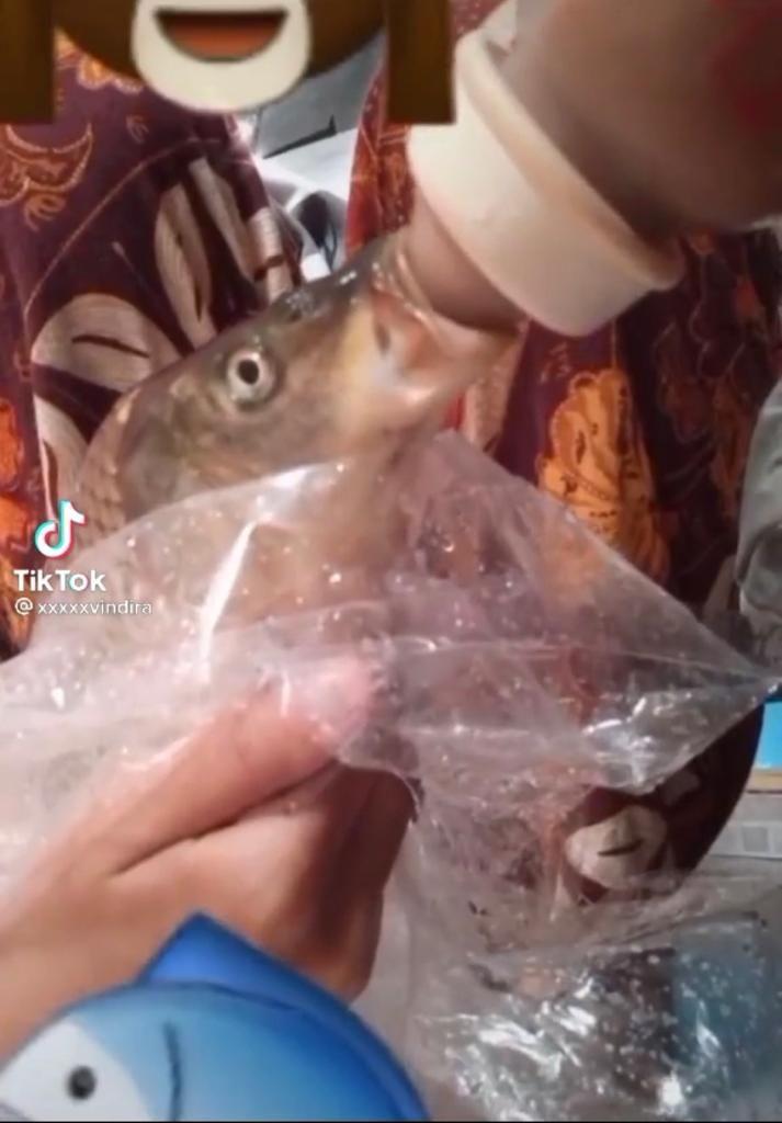 Kocak! Wanita Ini Susui Ikan Peliharaannya Pakai Botol Susu