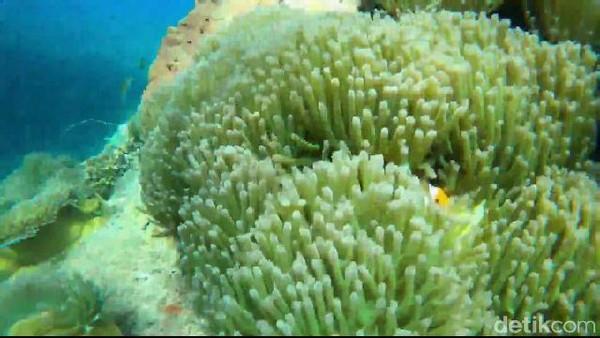 Anda bisa bermain-main dengan ikan Nemo, yang menjadi satwa endemik alam bawah laut Pantai Bohay, dan jika beruntung bisa melihat kawanan hiu tutul mencari makanan plakton di sekitar pantai tersebut.