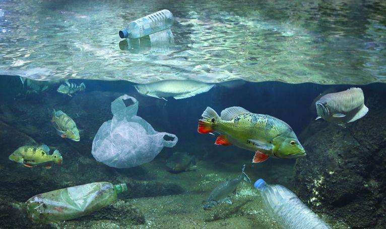 Waspadai Kandungan Mikroplastik Pada Beragam Jenis Kerang