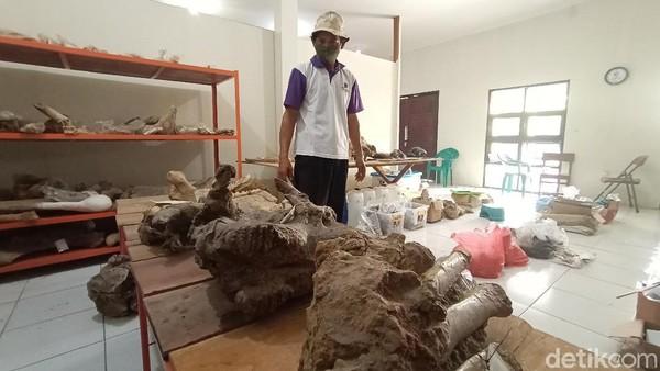 Koordinator Museum Purbakala Patiayam, Jamin mengatakan, ada sejarahnya mengapa di wilayah Patiayam bisa ditemukan banyak fosil hewan purbakala. Menurut peneliti, ada dua alasan. Dua kejadian, dari mulai perubahan alami dari laut perubahan menjadi daratan. Lalu karena letusan gunung berapi.