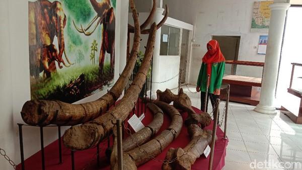 Pada tahun 2008 lalu, ada fosil gajah purba yang keutuhan fragmen hampir 90 persen. Jamin mencatat hingga Mei sampai Desember 2020 ada 40 penemuan baru. Itu pun jumlah fragmen belum dilakukan identifikasi.