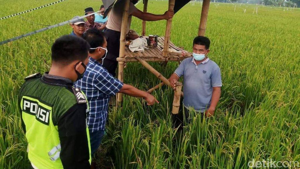 Kakek di Jombang Tewas Tersambar Petir Saat Jaga Padi di Sawah