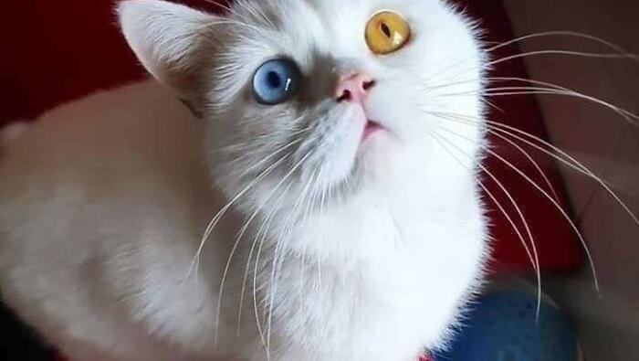 kucing gemas