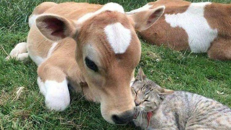 Gagal Traveling, Jangan Manyun Dong! Hibur Diri Lihat Kucing-kucing Gemoy Ini