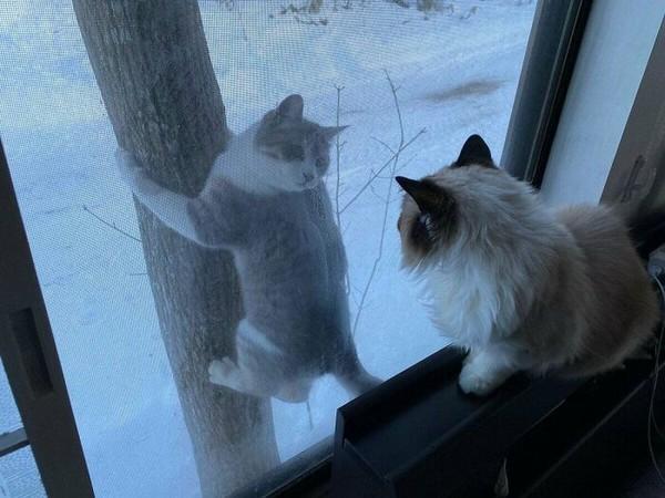 Duh betapa bucinnya kucing ini. Dia memanjat pohon setiap hari untuk bisa menyapa kucing lain.