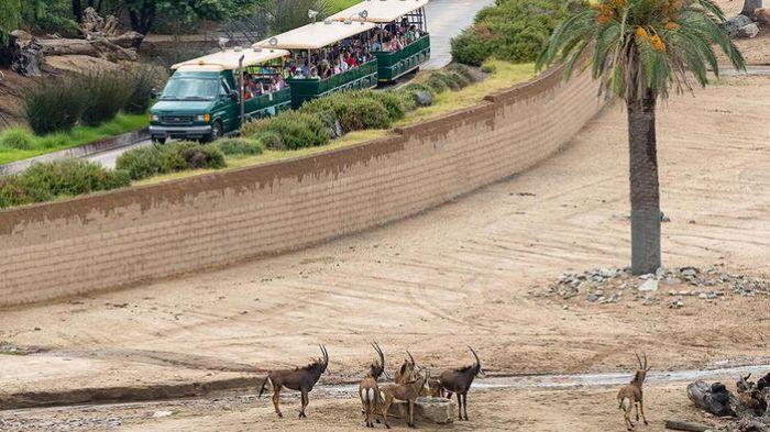 Kebun binatang San Diego