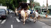 Tiga gerobak sapi melintas di jalan Solo-Semarang, Boyolali, Rabu (13/1/2021).