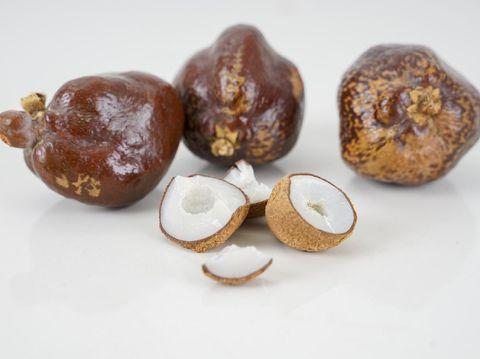 buah zuriat atau Hyphaene thebaica atau doumin