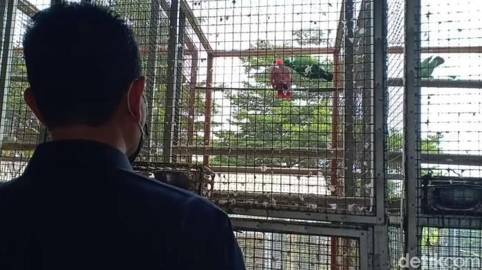 Tim gabungan dari Mabes Polri, Ditjen KSDAE dan BKSDA Jabar berhasil mengungkap kepemilikan satwa jenis burung yang dilindungi di Sukabumi, Jawa Barat.