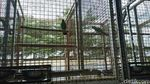 184 Burung Langka dan Dilindungi Disita di Sukabumi