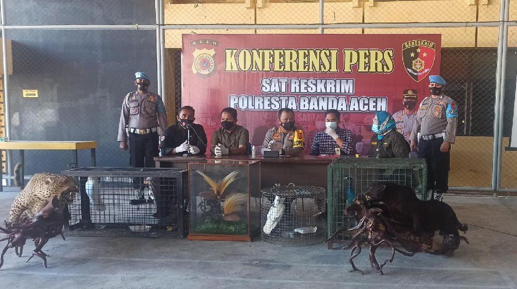 Polisi Sita Koleksi Cenderawasih-Jaguar Awetan di Rumah Bandar 200 Kg Sabu
