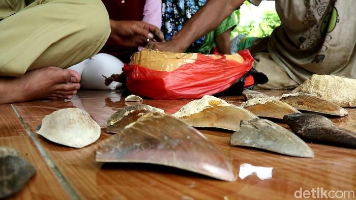 Lokasi perburuan fosil gigi hiu di Sukabumi ternyata dulunya lautan