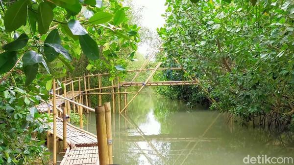 Destinasi wisata edukasi ini pun menambah destinasi baru dengan konservasi bakau. Tanaman bakau memanjang di muara pantai, layaknya hutan Amazon. (Ardian Fanani/detikTravel)