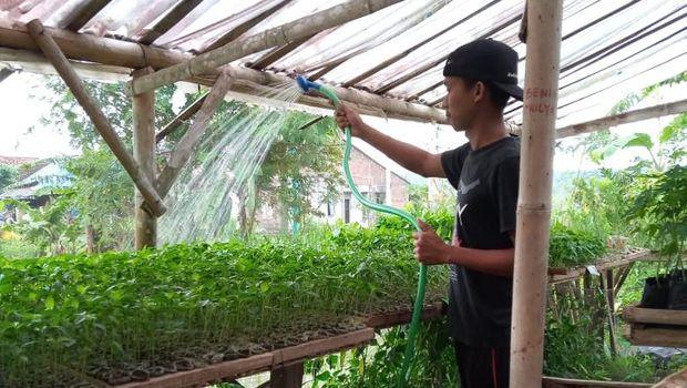 Satpam Banting Setir Jual Bibit Sayuran Modal Rp 500 Ribu, Mau Ikutan?