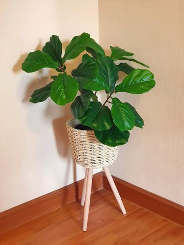 Fake flowers in a wicker pot with stand for Interior.Artificial flowers  made by fabric and plastic use decorated. Fiddle Fig is a tropical plant in the Banyan family.Ficus Lyrata