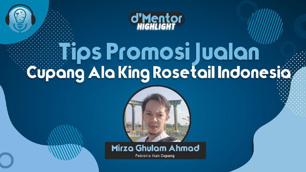 Promosi Ikan Cupang Ala King Rosetail Indonesia