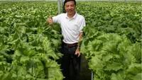 Eks Bos Disc Tarra yang Jadi Petani Cerita Gurihnya Bisnis Pertanian