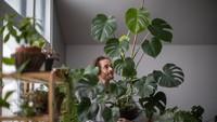 8 Cara Merawat Tanaman Hias Agar Tumbuh Subur dan Tak Layu