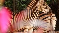 Melihat Koleksi Satwa di Bandung Zoo