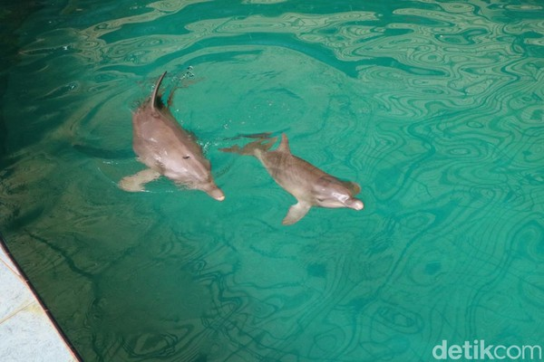 Nama Uchuy diberikan langsung oleh Menteri Lingkungan Hidup dan Kehutanan, Siti Nurbaya. Nama itu mewakili sifat bayi dolphin yang memang enerjik dan lincah.