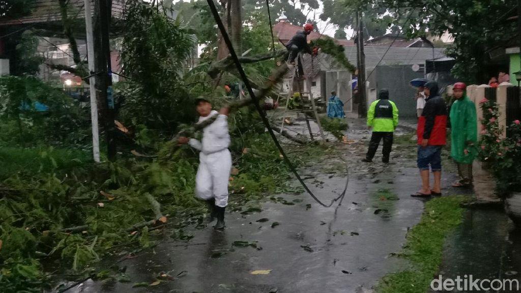 Hujan Deras Terjang Bandung, Pohon Setinggi 15 Meter Tumbang