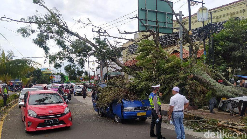 Detik-detik Pohon Tumbang di Cianjur, Timpa Angkot-Pikap