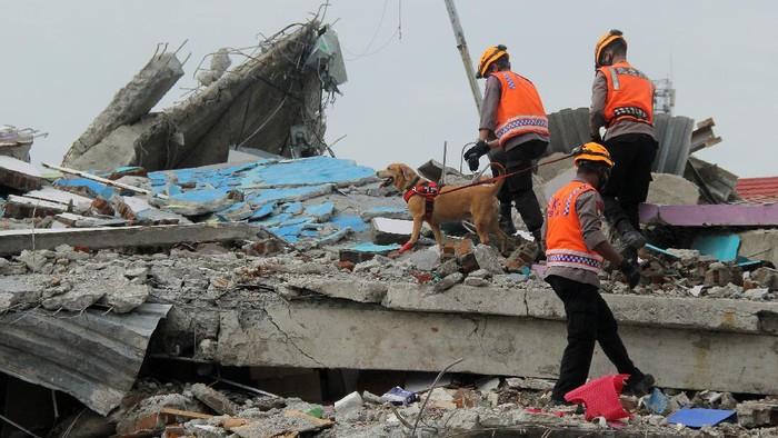 Proses pencarian dan evakuasi korban gempa Mamuju, Sulbar, masih terus dilakukan. Polisi pun kerahkan anjing pelacak untuk bantu pencarian dan evakuasi korban.