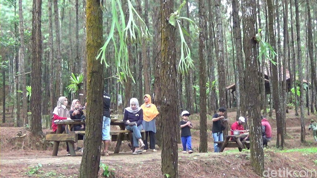 Makan di Tengah Hutan Pinus Buaran, Banjarnegara