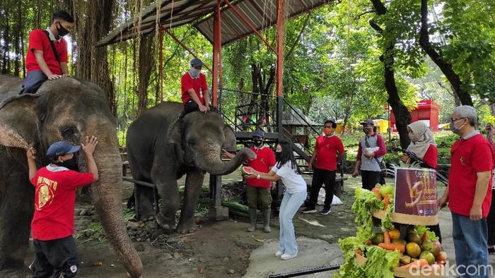 Dua ekor gajah di Solo bernama Manohara dan Dian mendapat hadiah gunungan buah. Beragam buah-buahan itu diberikan dalam rangka memperingati HUT Taman Satwa Taru Jurug (TSTJ).