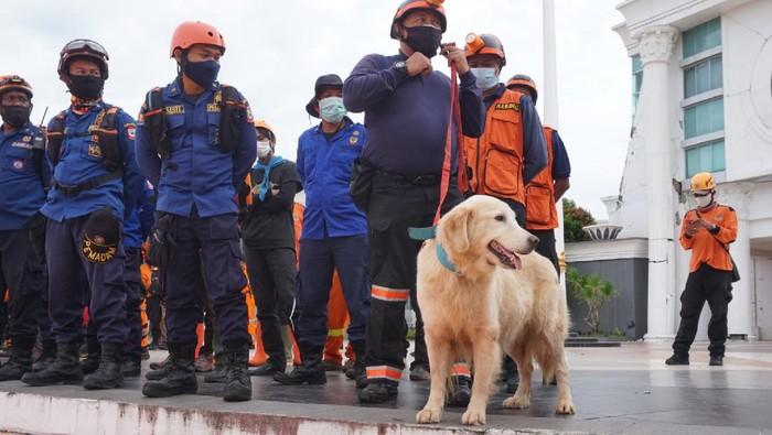 Petugas Basarnas Libatkan K9 untuk Pencarian Korban Gempa Sulbar