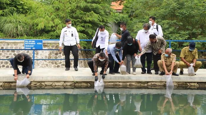 Menteri Kelautan dan Perikanan Sakti Wahyu Trenggono melakukan rangkaian kerja dengan menebar benih Ikan Nilem di Embung Gadingan, Yogyakarta.