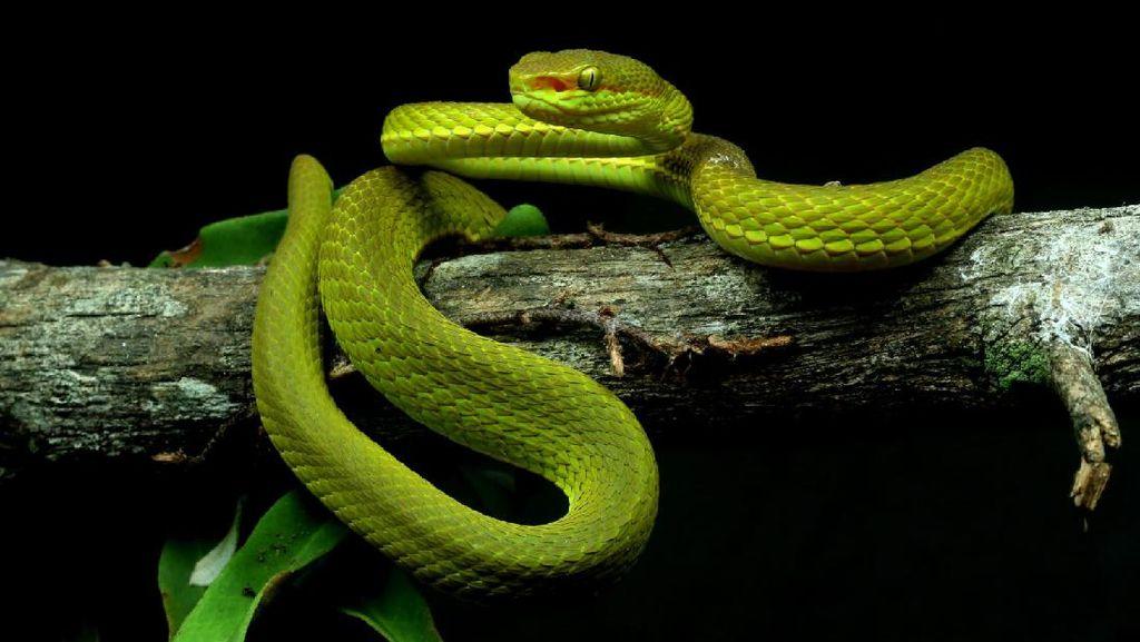 15 Spesies Baru yang Unik dan Ajaib