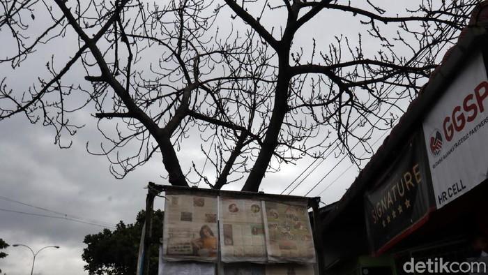 Sebuah pohon di Jalan Raya Soekarno Hatta, Kota Bandung, tampak kering dan tidak berdaun. Pohon tersebut rawan tumbang apalagi saat ini puncak musim hujan.