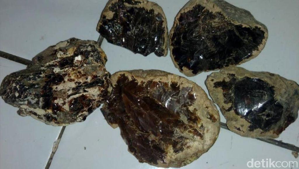 Batu Bau Kemenyan Ditemukan di Lokasi Perburuan Gigi Megalodon Sukabumi