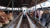 Melihat Peternakan di Tengah Tingginya Harga Daging Sapi