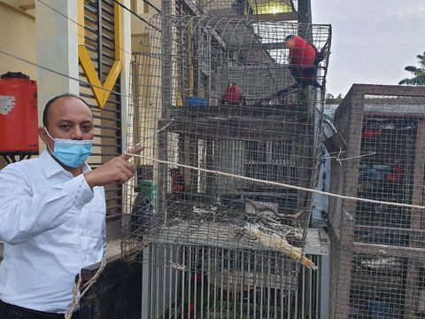 Pria di Kalbar diamankan karena pelihara 15 burung kasturi satwa dilindungi (Dok istimewa)