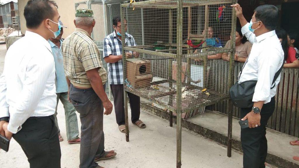 Pelihara 15 Burung Satwa Dilindungi, Pria di Kalbar Diamankan