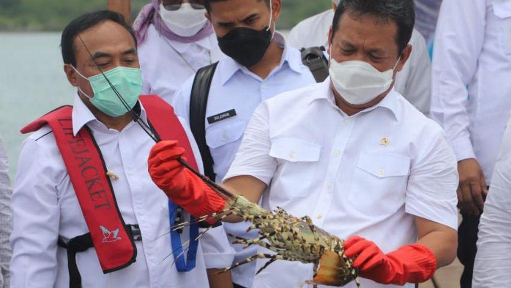 Trenggono Mau Lobster Dikembangkan di dalam Negeri