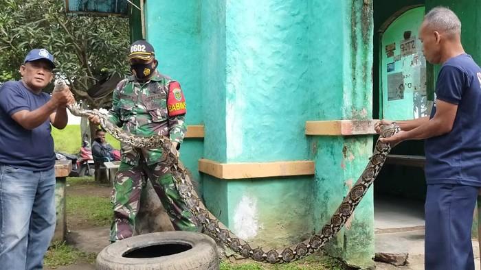 Ular Sanca di Puspemkot Serang Banten