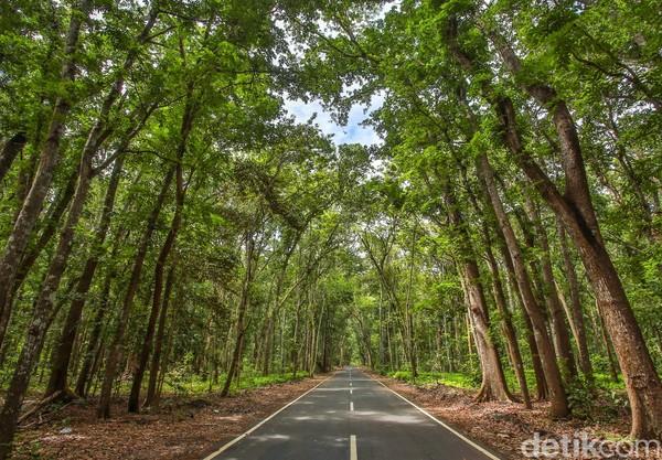 Taman Nasional Alas Purwo memiliki keindahan baik flora dan fauna. Dianggap sebagaitanah tertua di Pulau Jawa, destinasi ini berada di ujung tenggara Pulau Jawa, tepatnya berada di Kecamatan Tegaldlimo dan Kecamatan Purwoharjo, atau 65 kilometer dari pusat kota Banyuwangi.