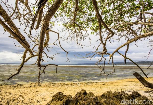 Karena berada di pesisir pantai selatan, TN Alas Purwo juga diberkahi deretan pantai eksotis. Beberapa pantainya yakni Pantai Parang Ireng, Pantai Ngagelan, Pantai Pancur dan Pantai Plengkung.