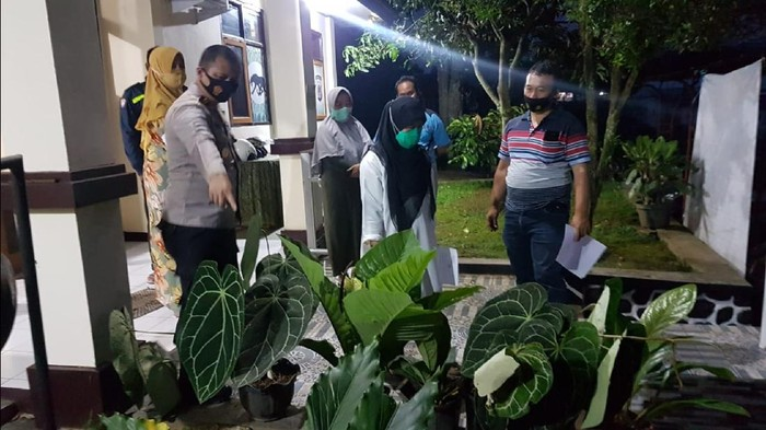 Pencuri tanaman janda bolong di Sukabumi.