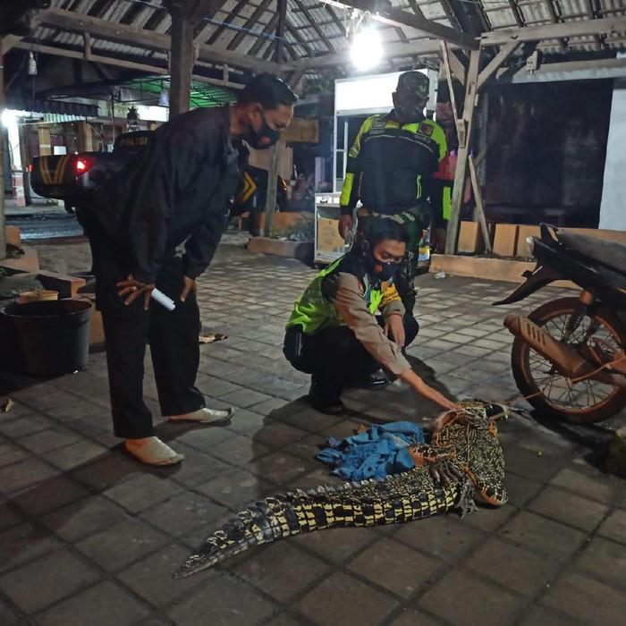 Seekor buaya air tawar ditangkap nelayan dan warga Dusun Gisik Kidul, Desa Tambak Cemandi, Kecamatan Sedati, Sidoarjo. Seperti apa awal kemunculan buaya itu?